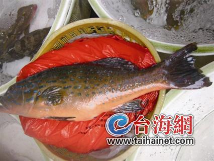在开禾市场每公斤24元;香头鱼新货很新鲜,每公斤50元;东星斑每公斤190